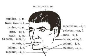 un'immagine da Orbis Latinus Pictus